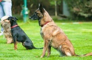 How to Practice Dog Obedience with Tips