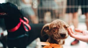 Tips on How to Select a Puppy from an Animal Shelter
