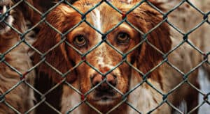Types of Dogs Adopted from Animal Shelters