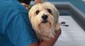 Pet Life Saving Aid