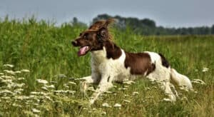 Tips to Control your Dog from Running Off