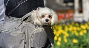 Best Dog Carrier Backpack for Small Dogs