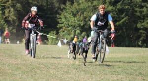 Photo of A Bike Race With Dogs on Dog Bike Leash