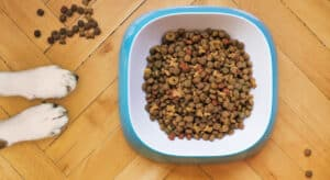Photo of two dog paws beside a full dog bowl. A reminder for did you feed the dog?