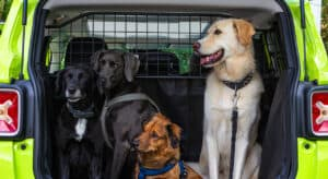 Photo showing 3 dogs behind a dog car barrier