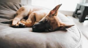 Should our Puppy Sleep in Your Bed