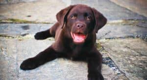 Devising A Puppy Schedule