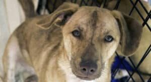 Dogs Adoptions from PetFinder