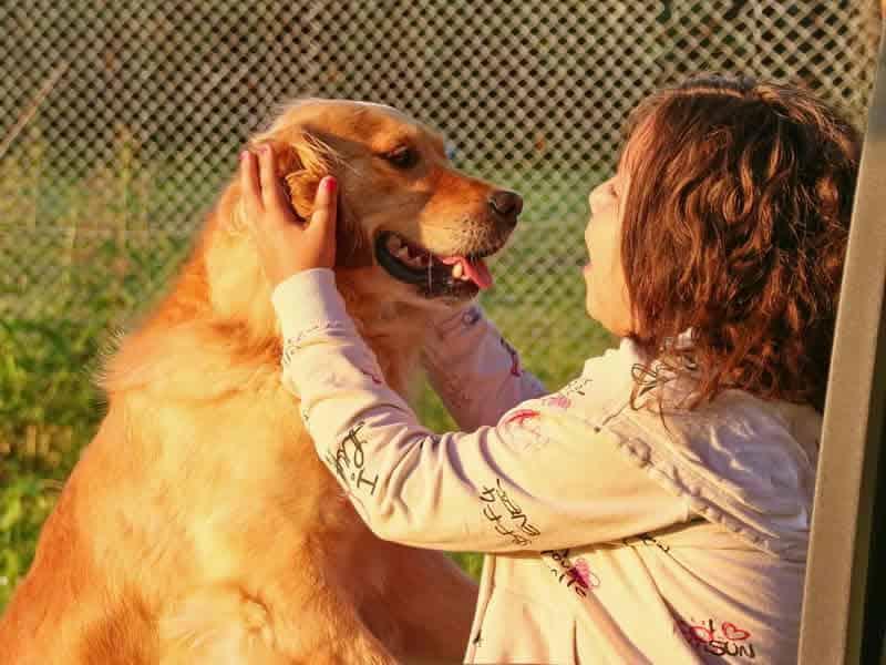 Understand How To Speak Dog
